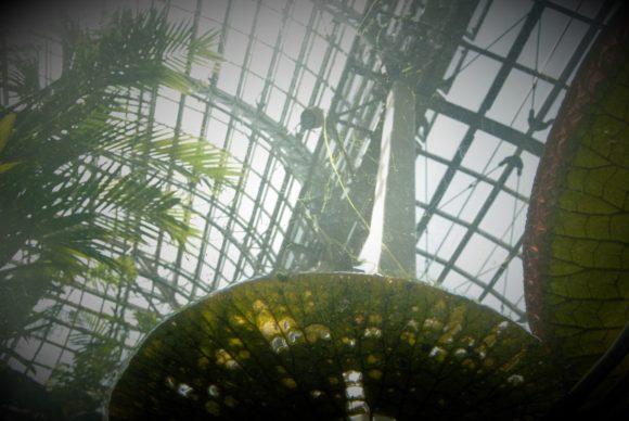 牧野植物園 温室