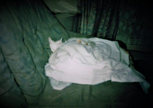熟睡するミル。