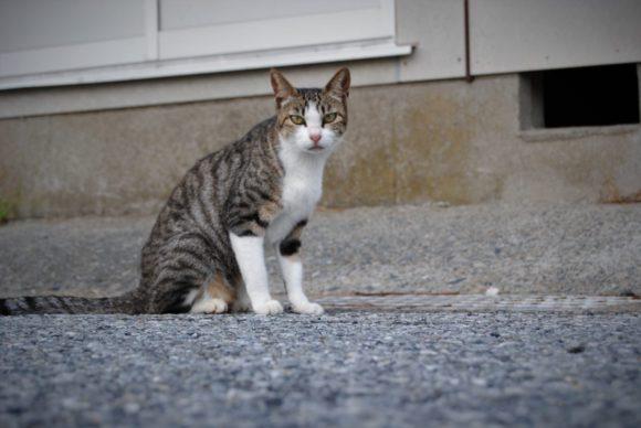 2018年に撮影したトラ猫。