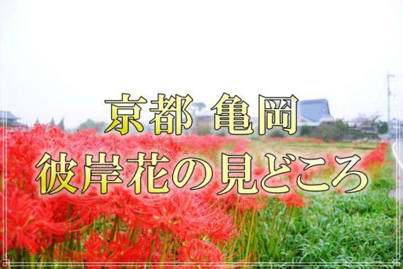 京都,kyoto,観光,嵐山,亀岡,彼岸花,穴太寺,インスタ映え,アクセス,写真,紅葉前,おすすめ,絶景,行き方,アクセス,撮り方,花,あなおじ,見ごろ,9月,バス,キャッチアイ