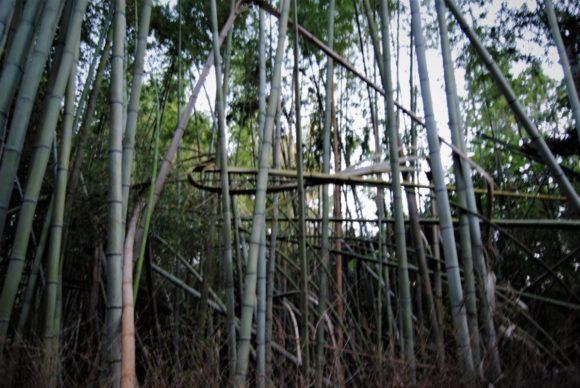 台風21号の影響で入り口付近の竹が痛々しかったです。