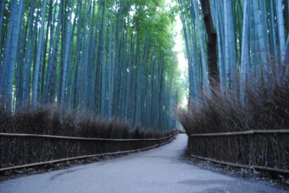 京都の「竹林の小径」。素晴らしい観光スポットも個性的な写真は撮れない。
