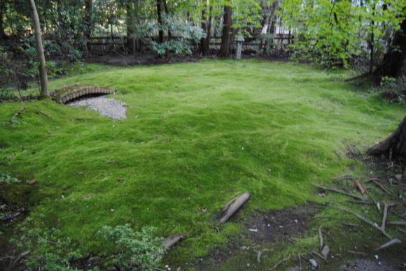 奥に進むと「野宮じゅうたん苔」が見えます。ビロードのようで綺麗でした。