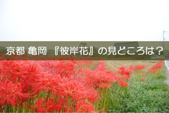 1_京都,亀岡,彼岸花,穴太寺 (19)