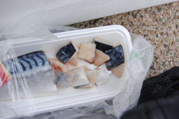 塩サバを穴釣り用にハサミでぶつ切りにします。手が汚れるので、汚れてもよいタオルハンカチ等があればGOODです。