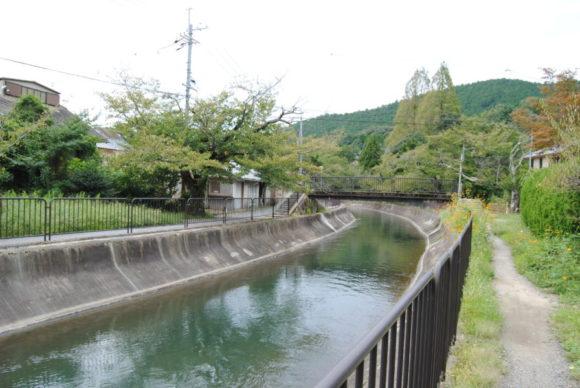 帰りは琵琶湖疏水の沿道を歩きます。腹減った…。