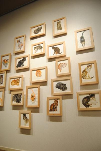 相島の猫たち