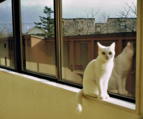 実家にいた猫のミルをモデルにします。