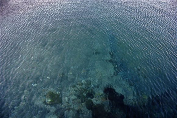 晴天が続いているので、透明度が超高い。内房は海がきれいです。
