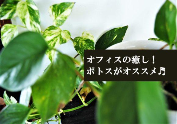 ポトス,育て方,植え替え,種類,花言葉,オフィス,水耕栽培,種類,水差し,班入り,支柱,観葉植物,おしゃれ,おすすめ,水やり,あらすじ,どのくらいで根がでるか,タワー,トイレ,ハイドロカルチャー,ヘゴ,ポイント,ポトス,ポトスの育て方,ポトスエンジョイ,ポトスタワー,ポトスタワーの作り方,ポトスライム,ポトスライムの舟,ポトスライムコンパクト,マーブルクイーン,ライム,ワンルーム,一覧,一週間,伸びすぎた場合,伸びない,何株,作り方,元気がない,元気ない,冬,切り方,切る,切る場所,剪定,剪定の仕方,剪定方法,動画,北,北東,土,増やし方,失敗,室内,寝室,屋外,恋愛,成長,手入れ,挿し木,支柱,方法,日陰,時期,根,根腐れ,植え替え,植え替え後,水,水やり,水挿し,水挿し後,水栽培,水栽培から植え替え,画像,病気,秋,種類,耐陰性,肥料,育て方,芥川賞,花,花壇,花瓶,花言葉,茎だけ,葉が茶色,葉っぱ,葉焼け,観葉植物,難しい,風水