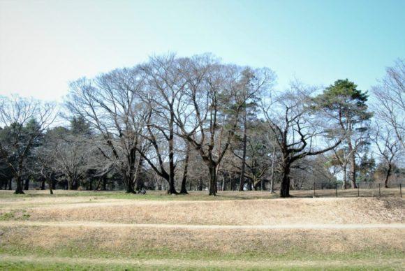 ゴルフ場の名残りを感じる野川公園。