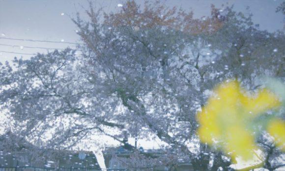 野川に写った桜と菜の花を添えて。