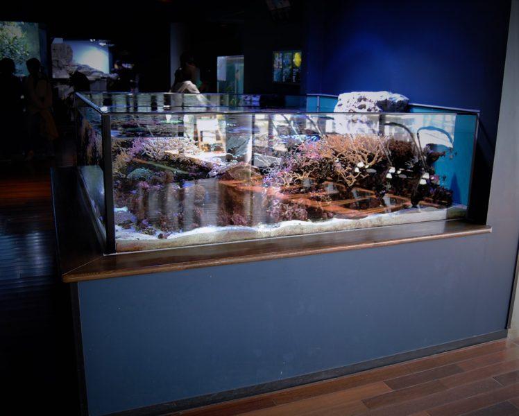 水族館の画像を見て気づくだろうか?