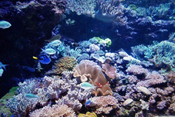 ほかの海水魚の水槽も色鮮やか。