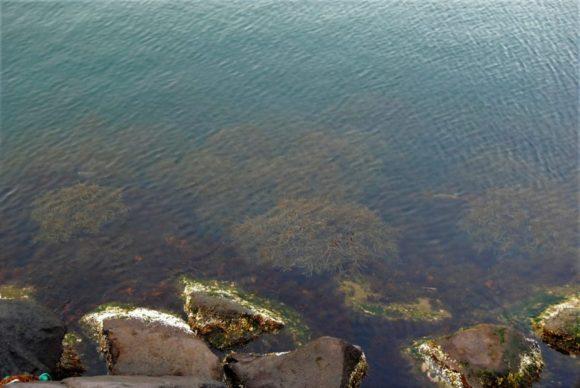 海は透き通ってきれい。