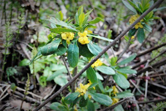 地味な黄色い花。君の名は。