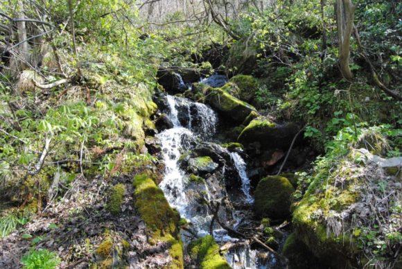 こんな小さな滝がいくつもあります。