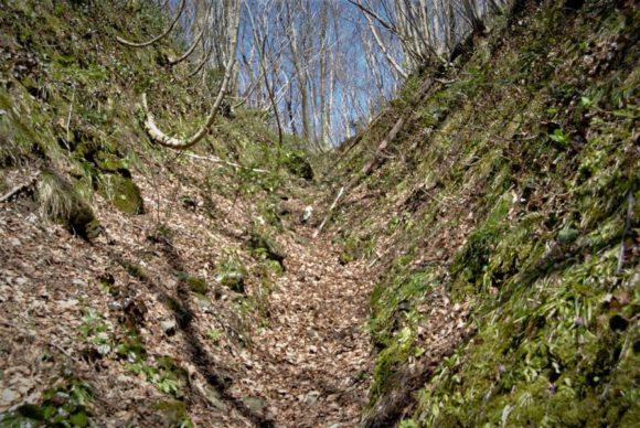 谷間に枯葉が積まれているフカフカの道も歩きにくい。