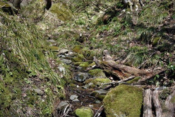 ほぼ川の道。足が濡れないように気をつけて登る。