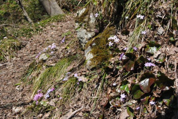 人がいない中キレイに咲いていると、不思議な感じがする。これが自然の形なんだな(みつを)