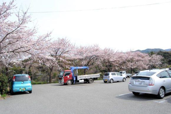 桜並木の向こう側が工場跡。
