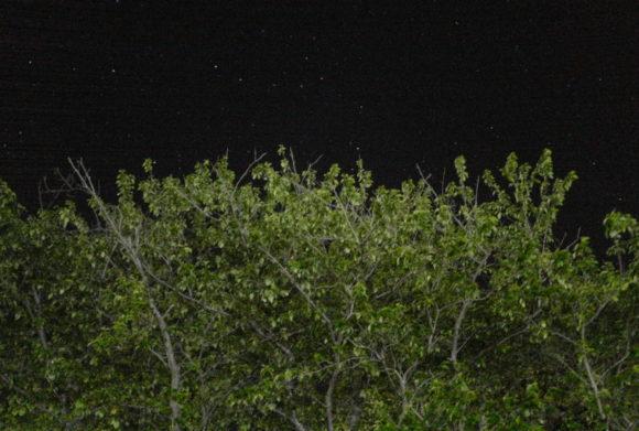 それにしても星がきれいだ(LeicaQPで撮影)