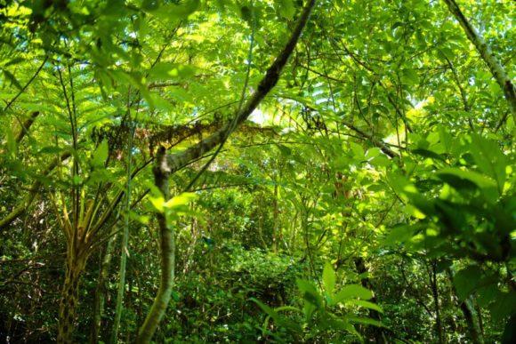 鬱蒼としたジャングルのよう。