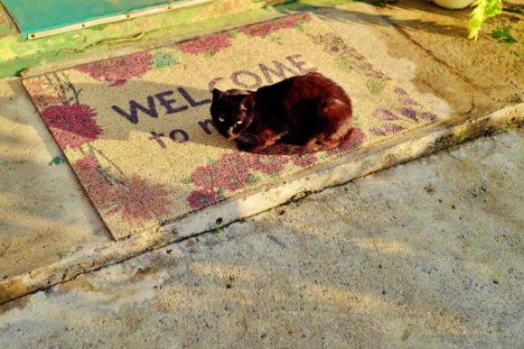 石垣島の「ウェルカム猫」。