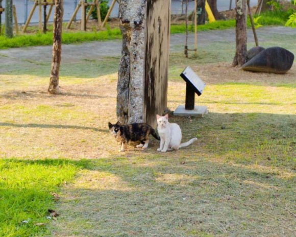三毛とベージュの猫たち。