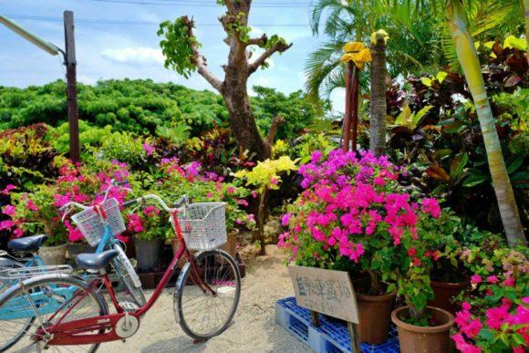 自転車置き場に駐輪。花がきれい。