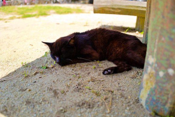 ベンチの下にいたネコ。なんだかぐったりしているようだ。