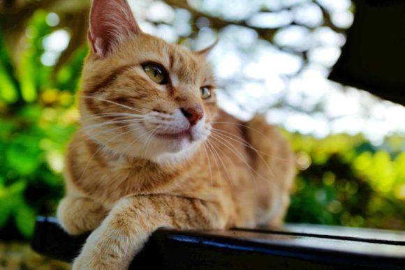 猫にとっても居心地のいいカフェ。