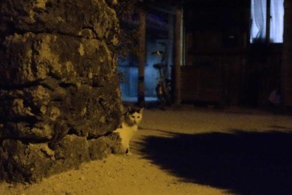 ちょっと怖い覗き猫