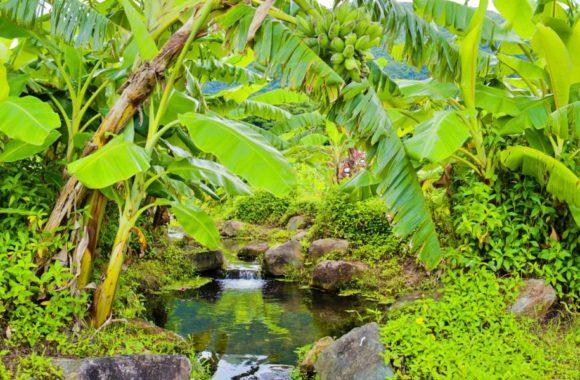 島バナナもなってるし、さすが沖縄です。