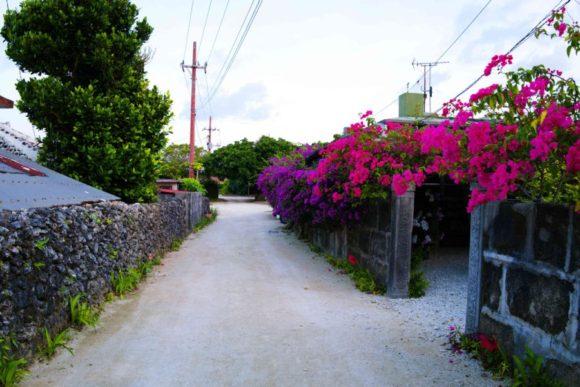 ブーゲンビリアが咲き誇る道を行く。(朝に撮影)