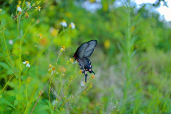 南国の蝶々がいた。