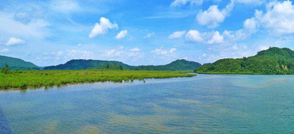 浦内川の河口。壮大なマングローブ林!