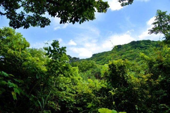 ワ~オ、ジャングルって感じ。森が深くなってきたぜ