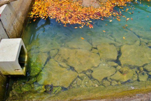 浅瀬に魚がいます(写真では分かりづらい)