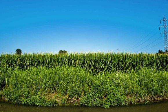 とうきび畑。