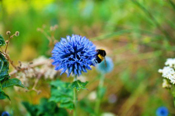蜂の配色がさっきのトリムと似ている。
