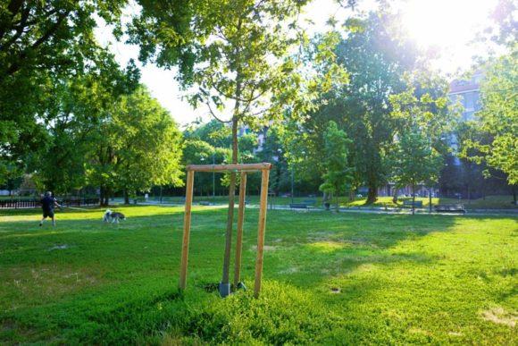 朝のジョヴァンニ・パオロII公園。でかい犬に引っ張られる人がいる。