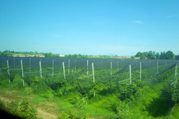 デセンツァーノ・デル・ガルダ~ポルタノーヴァの車窓。ワイン畑が続く。