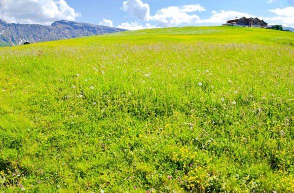 ビロードのように草花が咲き誇る。