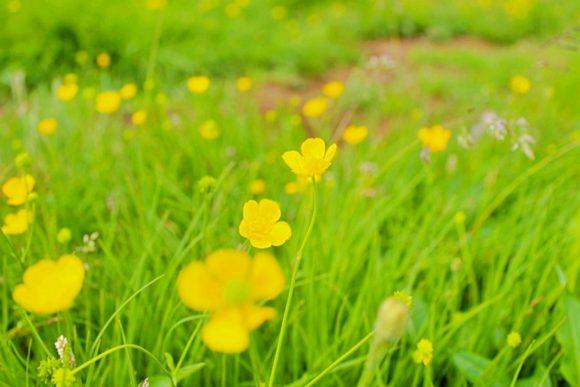 高山植物が咲いている(名前は知らないけど)。