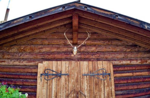 鹿の頭部がカッコイイ