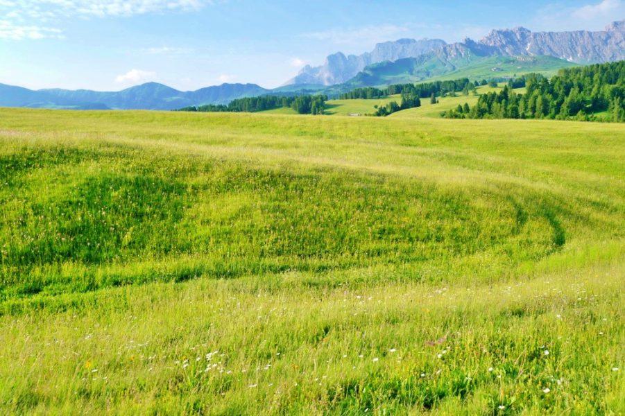 アルペディシウジの美しい牧歌的風景。