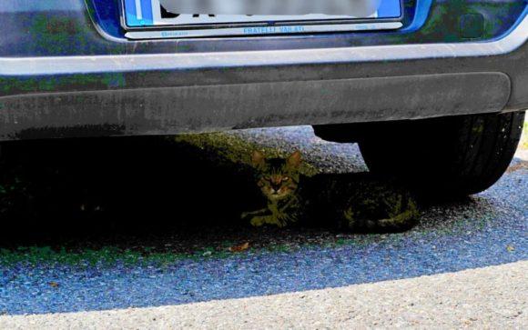 車の下には猫がいた。