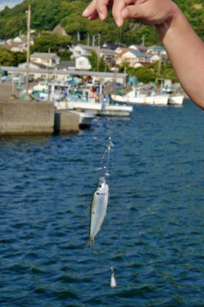 中井貴一氏はコンスタントに釣る。