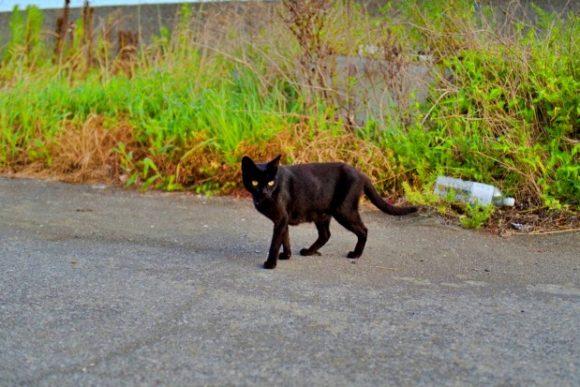 黒猫も毛並みが良いな。